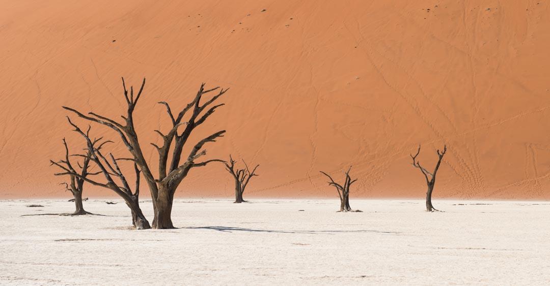 Afrique, Namibie, Sossusvlei,désert, Arbre séché