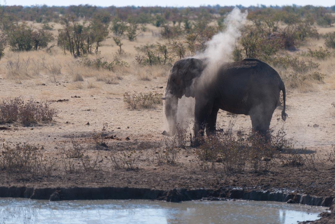 Afrique - Namibie - Etosha – Éléphant